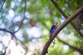 Cute little colorful bird on Maldives — Stock Photo
