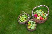 Large straw baskets full of harvested tomatoes on green grass — Stock Photo
