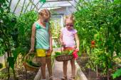 Little girls collecting crop cucumbers in the greenhouse — Stock Photo