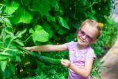 Adorable little girl collecting crop cucumbers in the greenhouse — Stock Photo