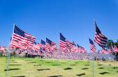 American flags on a field — Stock Photo
