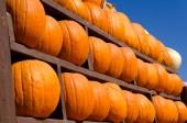 Pumpkin background — Stock Photo
