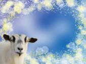 Goat head on Blue bokeh background — Stock Photo