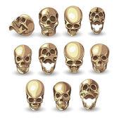 Set of eleven skulls — Stock Vector