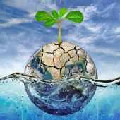 Lonely plant in the parched earth submerged in the ocean — Stock Photo