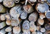 The logs and wood products,which were folded on a bunch — Stock Photo