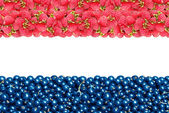 The flag of the Netherlands from raspberries and currants — 图库照片
