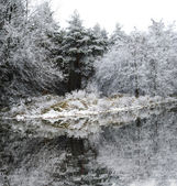 Trees covered with frost in late autumn by the lake — Stock Photo