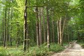Smala träd i ung skog gröna på sommaren — Stockfoto
