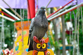 Lonesome Dove in the amusement park on swing — Stock Photo