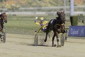 First horse racing season 2014 2015 — Stock Photo