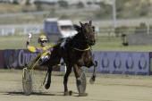 First horse racing season 2014 2015 — Foto de Stock