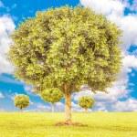 Boxwood green tree — Stock Photo #52418219