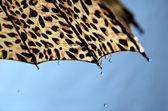 Paraply. — Stockfoto