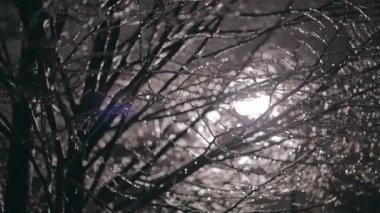 Drzewa w nocy — Wideo stockowe