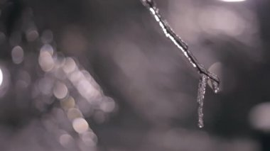 Tree branch with Sleet — Stock Video