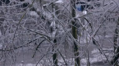 Tree with Sleet — Stock Video