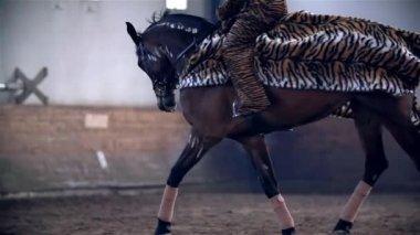 Horse Running in Riding Hall — Vídeo stock