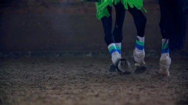 Horse Walking in Slow Motion — Vidéo