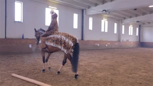 Tiger Horse Costume Riding a Tiger Horse Costume