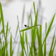 Dragonfly on River Grass — Stock Video #63968781
