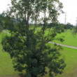 Green lawn and power lines. — Stock Video #64061361