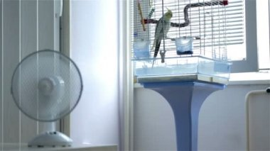 Ventilator Blowing Air — Stock Video