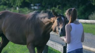 Young woman playing with horse — Stock Video