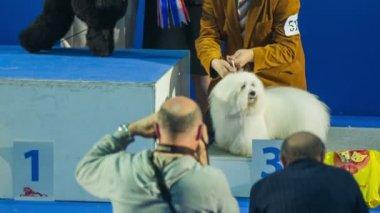 Photographer shooting winning dog — Stock Video