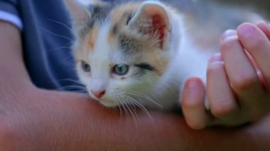 Person caressing little kitty — Stock Video