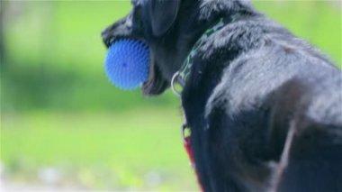 Dog  looking around. — Stock Video