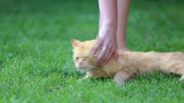 Person caressing orange cat — Stock Video