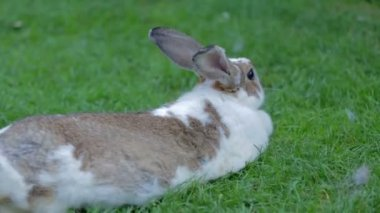 Rabbit in grass being caressing — Stock Video