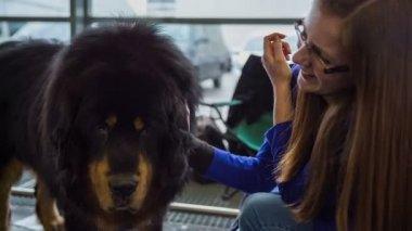 Woman caressing dog. — Stock Video