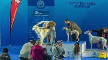 Dog winners on podium. — Stock Video