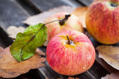 Wet fresh red apples in the garden — Stock Photo