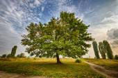 HDR shoot of a marple tree in a park — Stock Photo