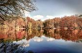 Panorama der Bäume im Herbst an einem glaserl See — Stockfoto