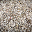 Background with sea shells on the riverside — Stock Photo #58380953