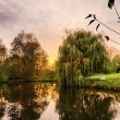 Hdr shoot of a weeping willow mirroring in a pond — Stock Photo #63154597
