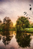 Hdr shoot of a weeping willow mirroring in a pond — Stock Photo