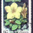 Постер, плакат: Postage stamp of the USSR 1977 Rhodendron Golden