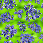 Beautiful bouquets of blue irises on green blured background — Stock Photo