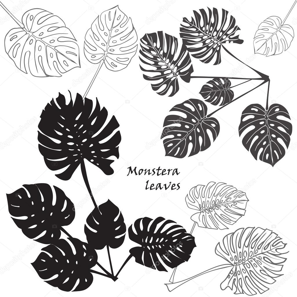 feuilles de monstera tropical silhouette noir isol sur fond blanc image vectorielle 98423698. Black Bedroom Furniture Sets. Home Design Ideas