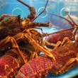 Lobsters in a restaurant aquarium — Vídeo de stock #62787339