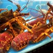 Lobsters in a restaurant aquarium — Стоковое видео #62787941