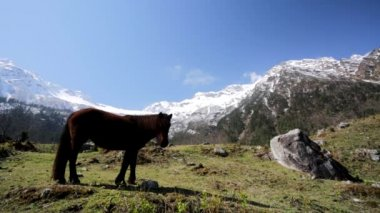 Horse pasturing in mountain environment — Stock Video