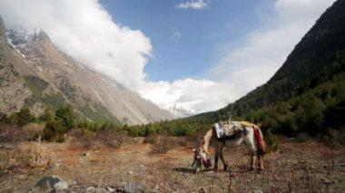Little horse pasturing — Стоковое видео