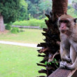 Monkey at Angkor Wat Temple — Stock Video #62791635