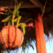 Flowerpot made from coconut — Stock Video #62796877